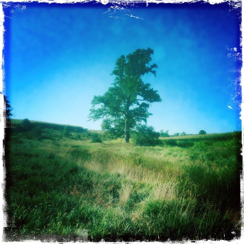 Vermont Tree