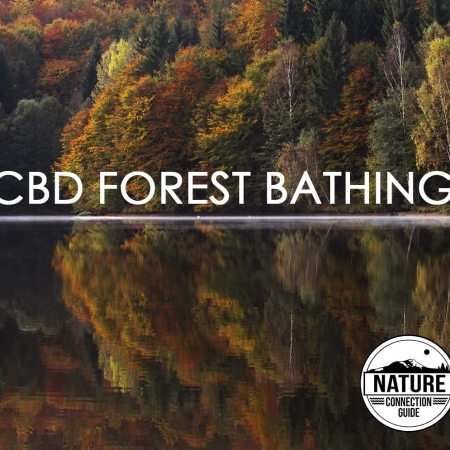 cbd-forest-bathing